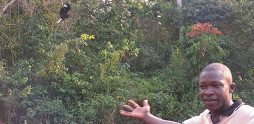 A man points to a wild chimpanzee up a tree