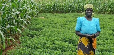 Farmer stands in her field of groundnuts boarded by maize in Malawi